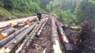 lemn, defrisari, paduri, busteni