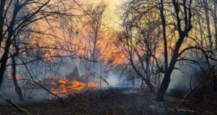 Incendii padure radioactiva Cernobil