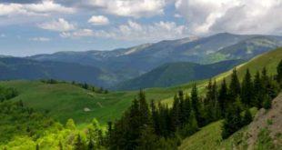 munte, padure, vara, Bucovina